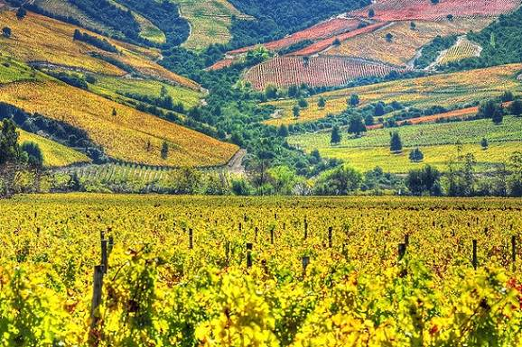 Discover the Best Wine Regions in Chile this Year