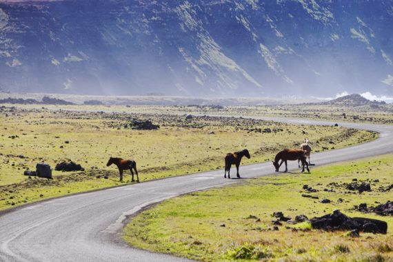 road and horses in easter island